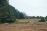 Elking along